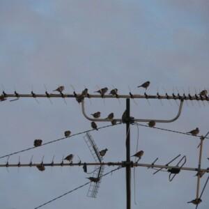 弱電界地域ならパラスタックアンテナがおすすめ!その理由とは?